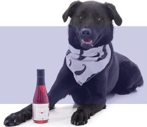 Apollo Peak Wine