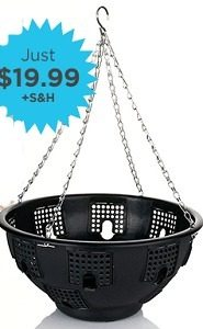 Betta Basket