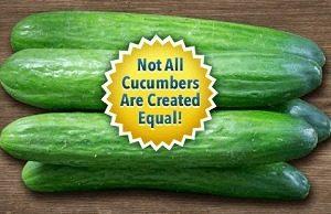 Cucumber Express
