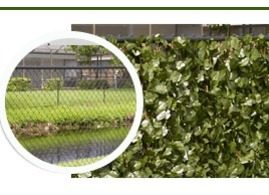 Hedge Fence