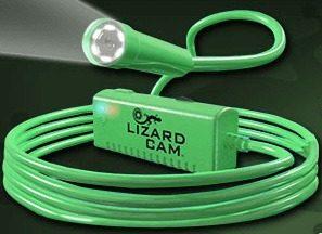 Lizard Cam