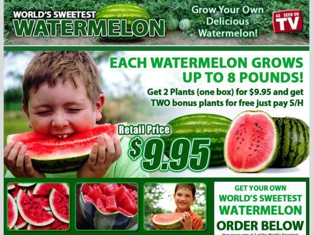 superb sweetest watermelon Part - 1: superb sweetest watermelon idea