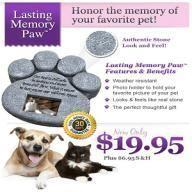 Memory Paw Review