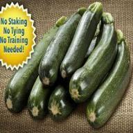 Zooming Zucchini Review